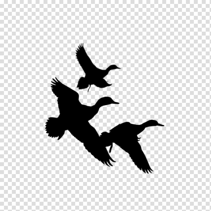 Duck Waterfowl hunting , Duck Silhouette transparent background PNG.