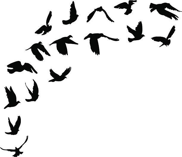 Best Birds Flying Illustrations, Royalty.