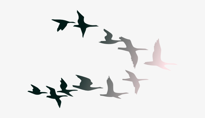 Clipart Images Of Birds Flying In Flight Clip Art At.