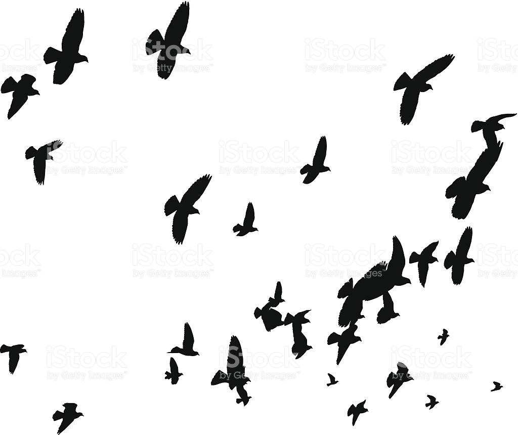 Birds Flying Clip Art, Vector Images & Illustrations.