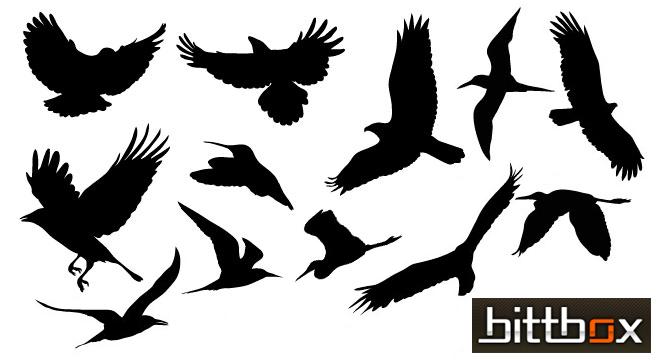 Free Vector Birds.