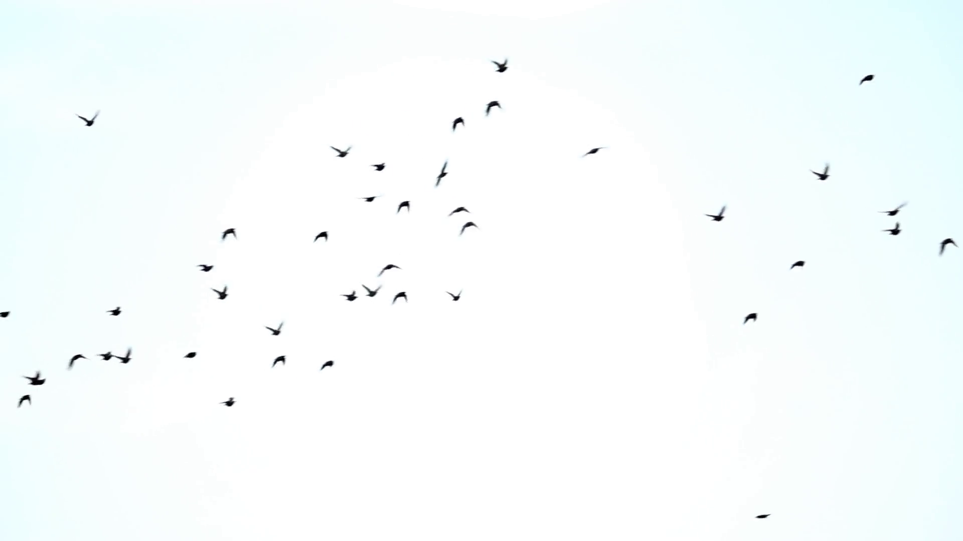 Birds flying in the sky in opposite directions. Stock Video Footage.