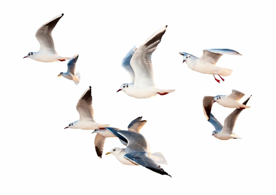 bird #birds #fly #flying #sky #whitebirds #space #ocean.