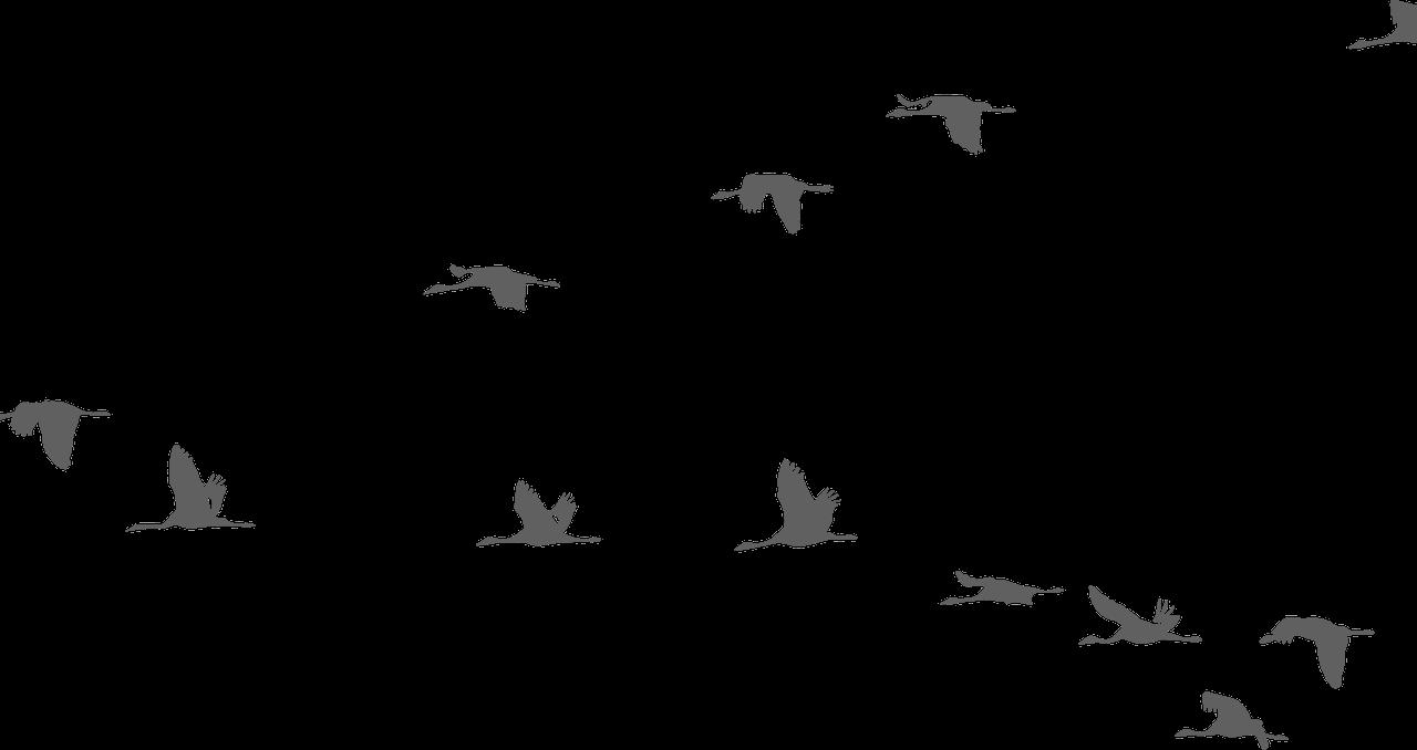 Bird Clipart Sky.