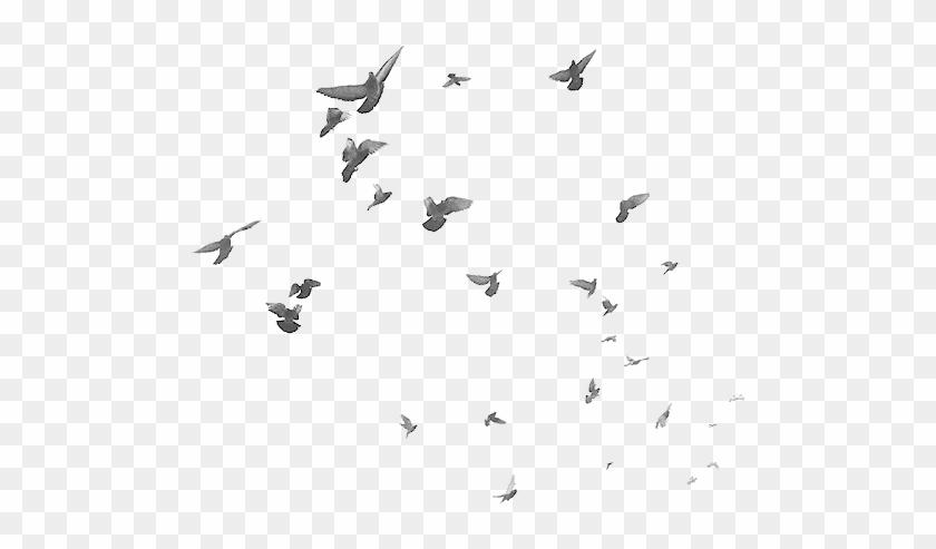 birds #flying #bird #flock #sky #freetoedit.
