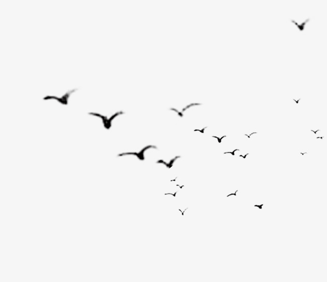 Flying Birds, Birds, Sky, Fly PNG Transparent Image and Clipart for.