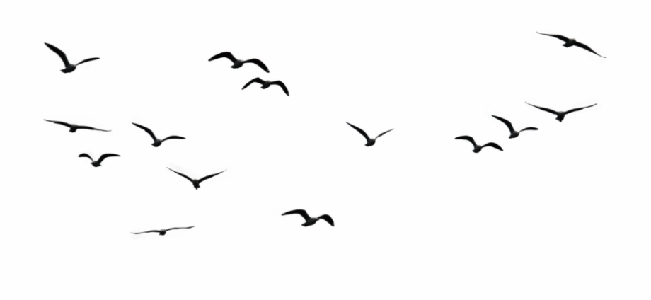 bird #birds #fly #flying #flock #sky #air #clouds.