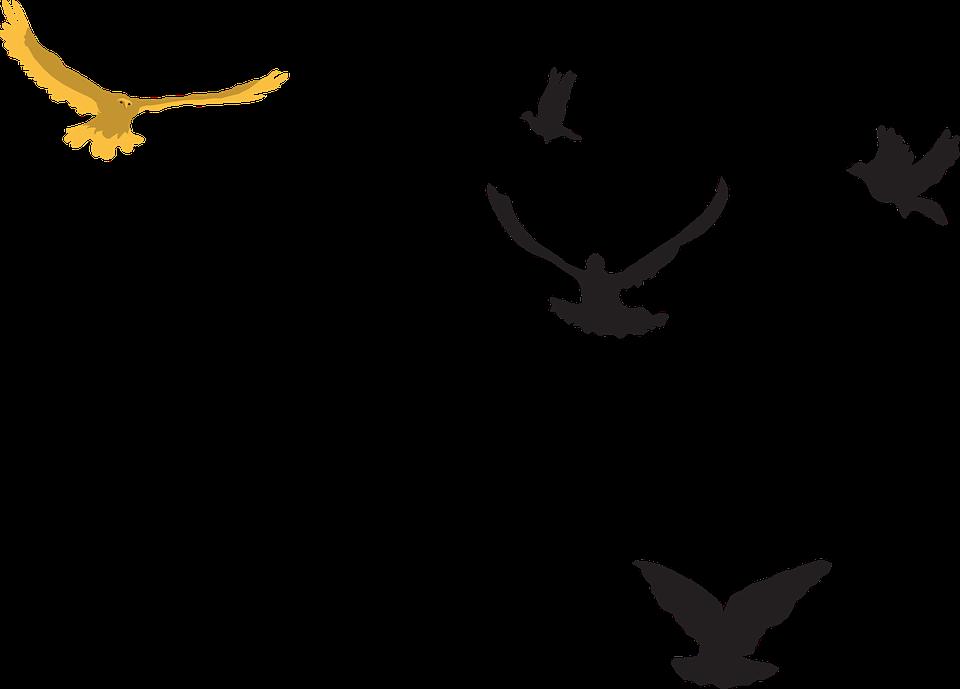 Yellow Black Birds.
