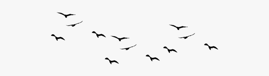Flying Bird Clipart Drawing.