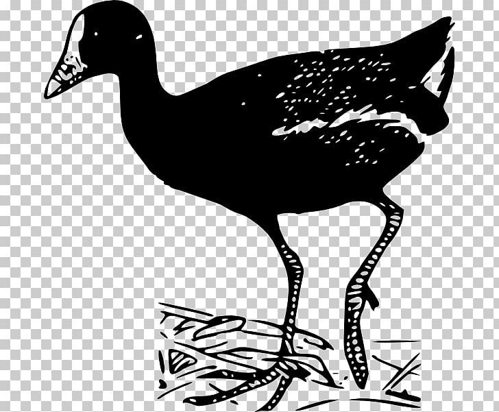 Bird , retro european wind frame PNG clipart.