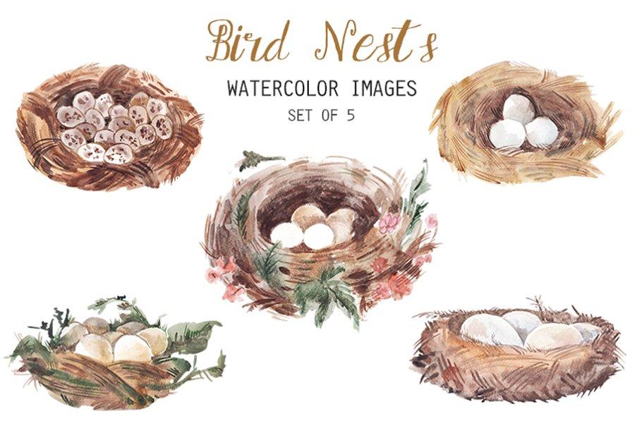 Watercolor Bird Nests Clipart.