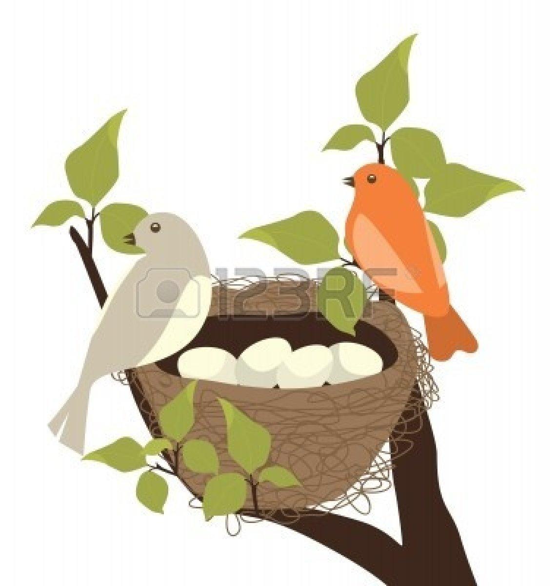 birds nest : Birds Nest.
