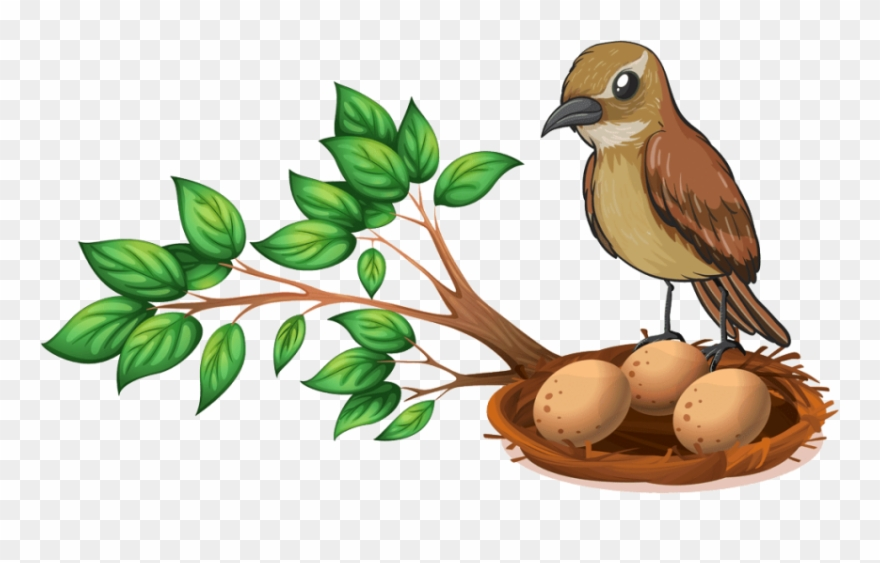 Free Png Download Bird Nest On Tree Png Images Background Clipart.