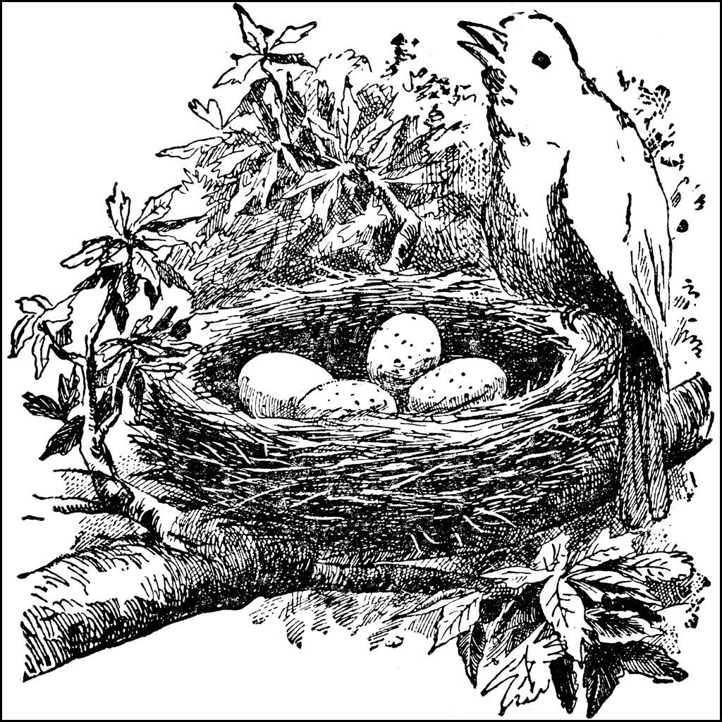 Bird Nests.