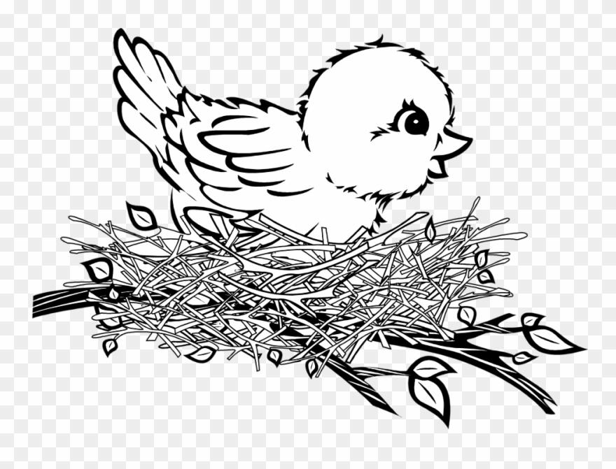 Banner Cartoon Birds Patterns Pinterest.