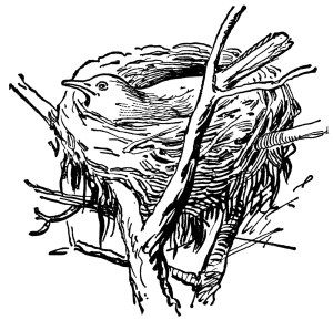 bird in nest, vintage clipart, black and white clip art, old school.