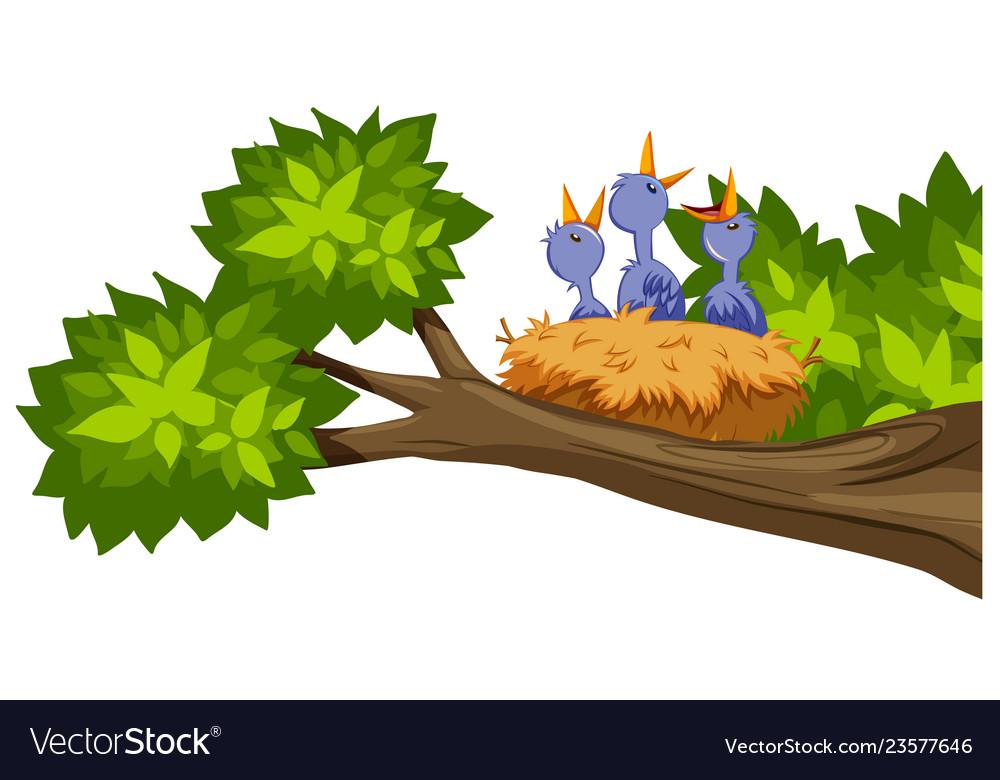 Bird nest on tree branch.