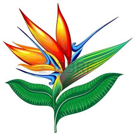 4,983 Bird Of Paradise Stock Illustrations, Cliparts And Royalty.