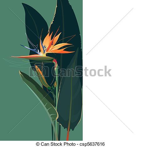 Bird of paradise Illustrations and Clip Art. 807 Bird of paradise.