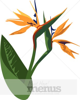 Birds of Paradise Clipart.
