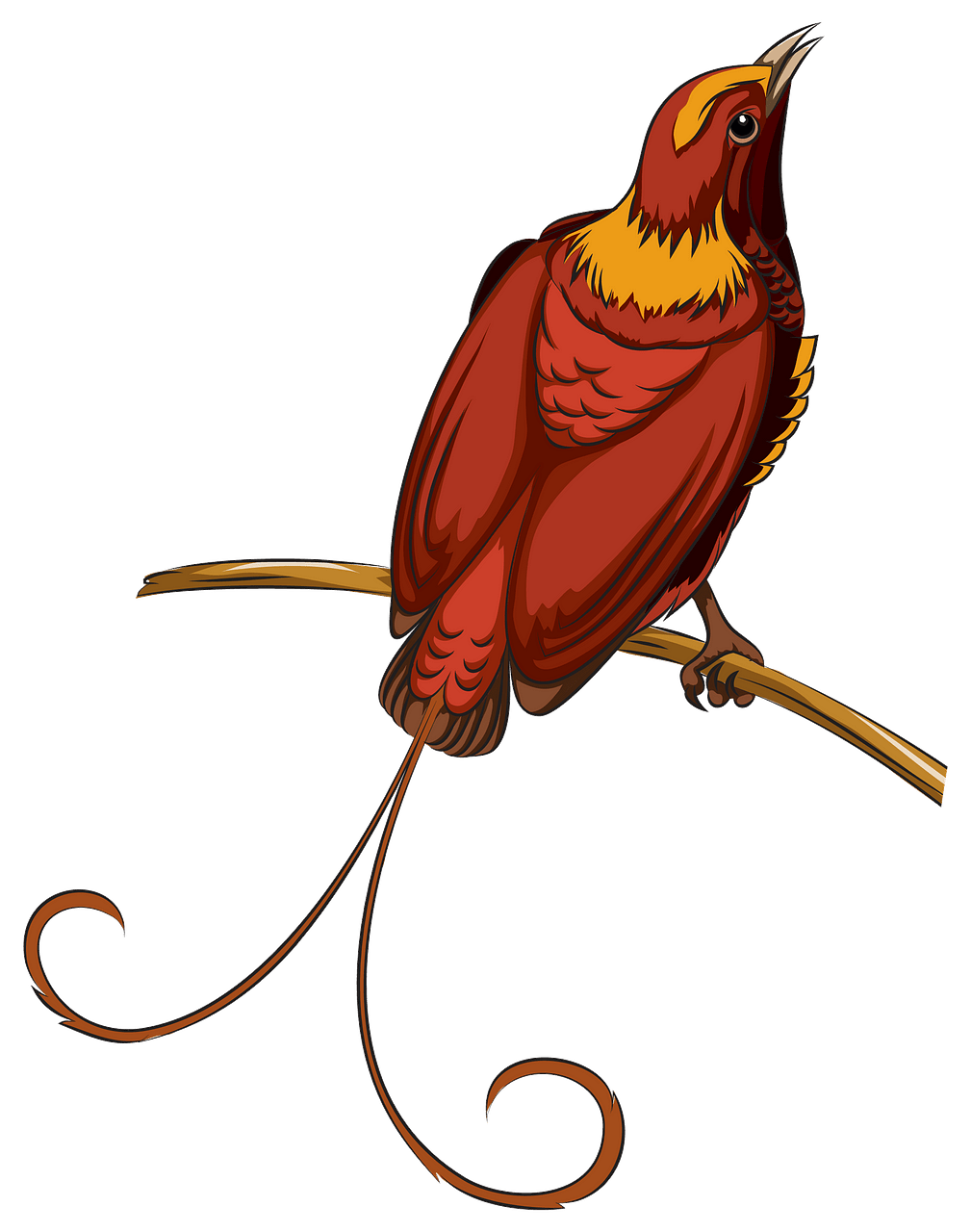 Bird of Paradise clipart. Free download..