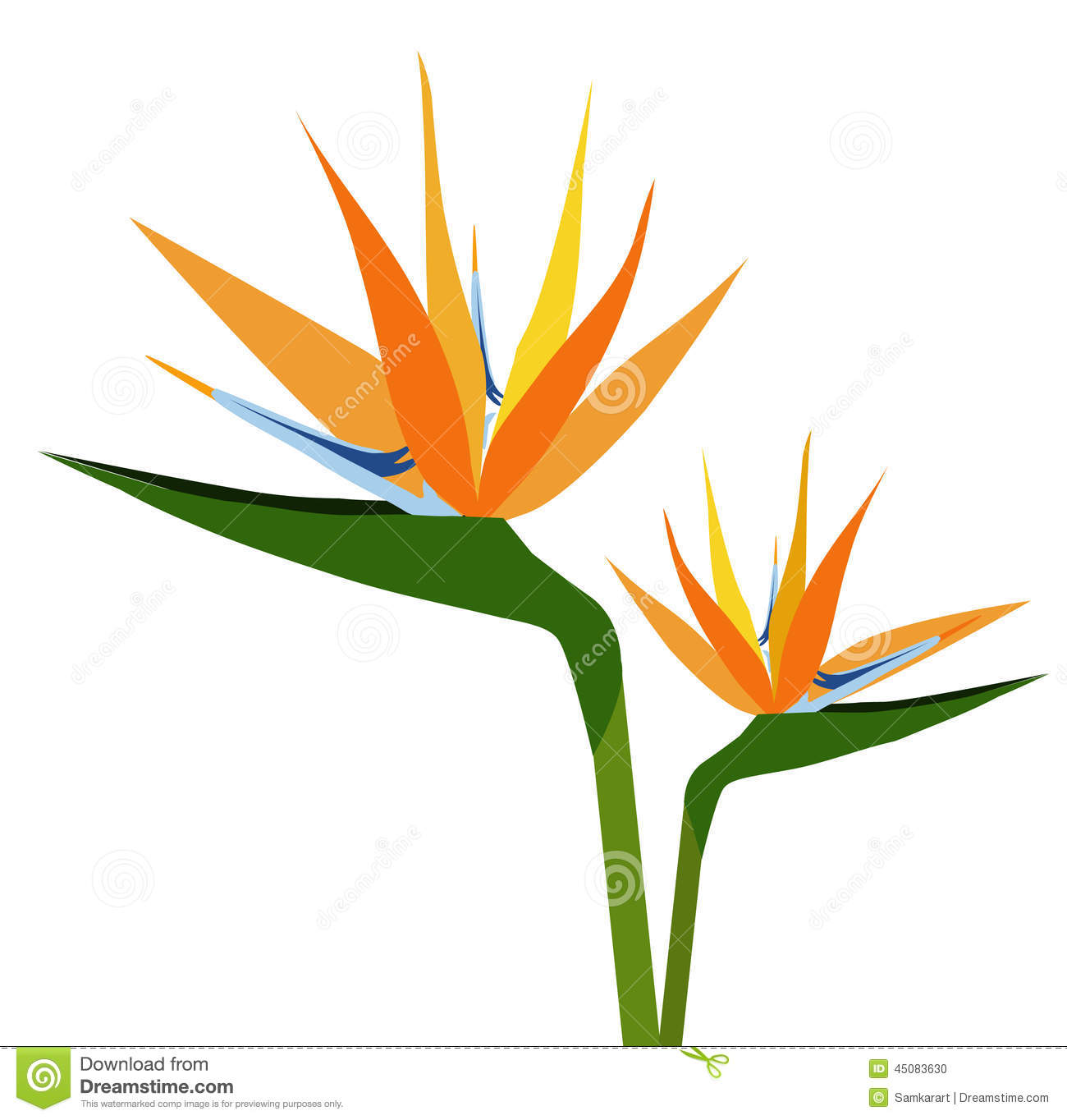 bird of paradise flower clipart 20 free cliparts. Black Bedroom Furniture Sets. Home Design Ideas