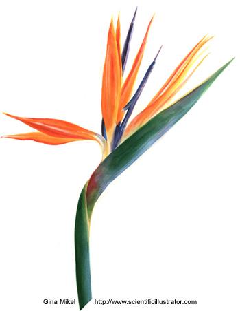 1000+ images about Flower tatt on Pinterest.