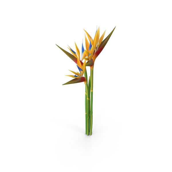 Bird of Paradise Flowers PNG Images & PSDs for Download.