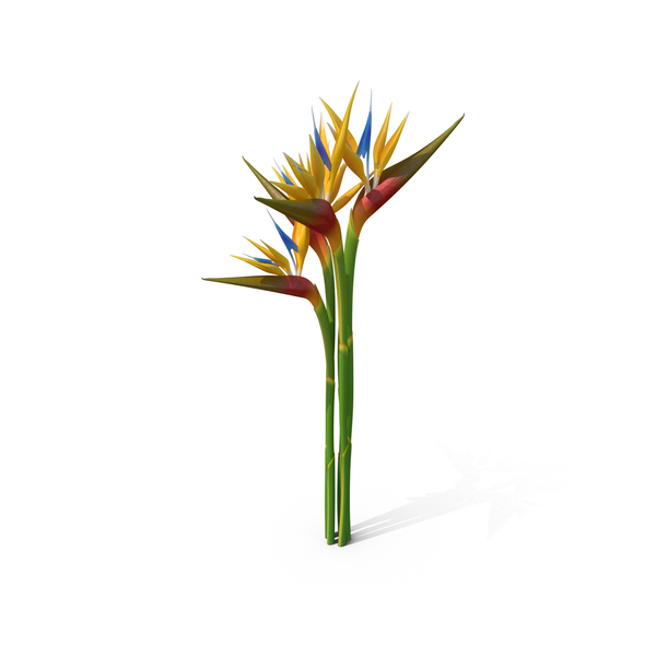 Bird of Paradise PNG Images & PSDs for Download.
