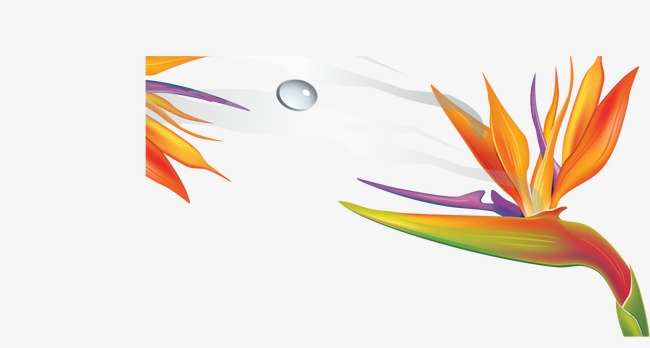 Bird Of Paradise Flower, Bird Vector, Flower Vector, Flowers PNG and.