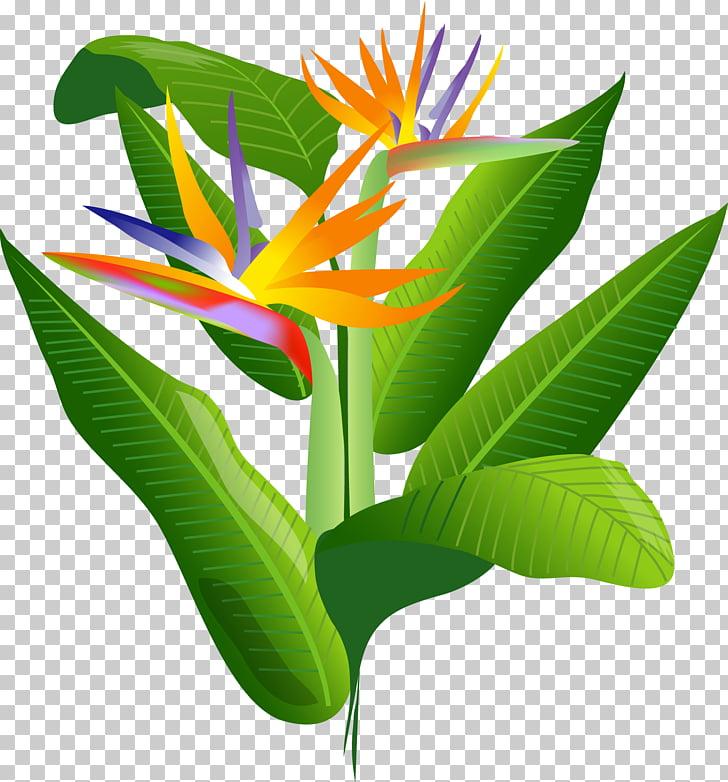 Bird of paradise flower, flower PNG clipart.