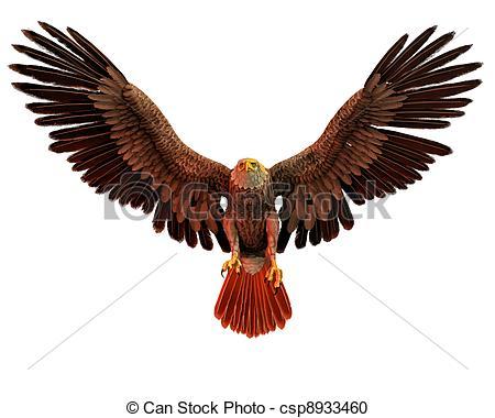 Bird prey Illustrations and Clip Art. 2,437 Bird prey royalty free.