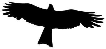 Black Kite Bird Prey Stock Illustrations.