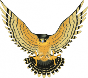 Bird Of Prey Clipart.