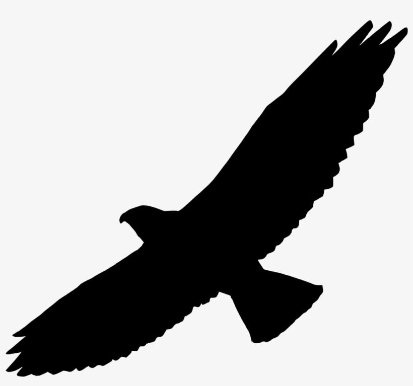 Bird Of Prey Swainson\'s Hawk Silhouette.