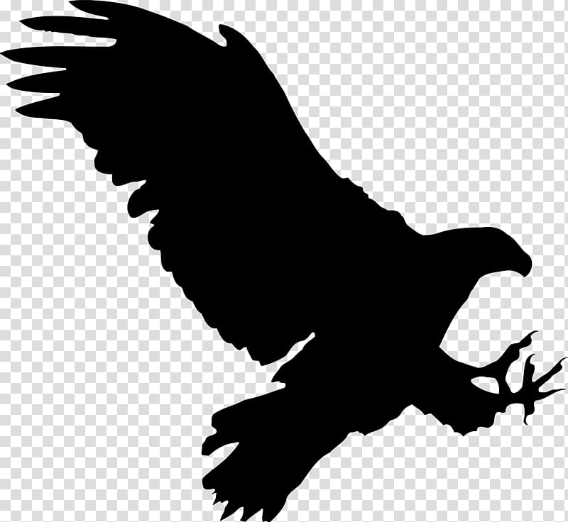 Eagle Bird, Silhouette, Streaming Media, Drawing, , Beak.