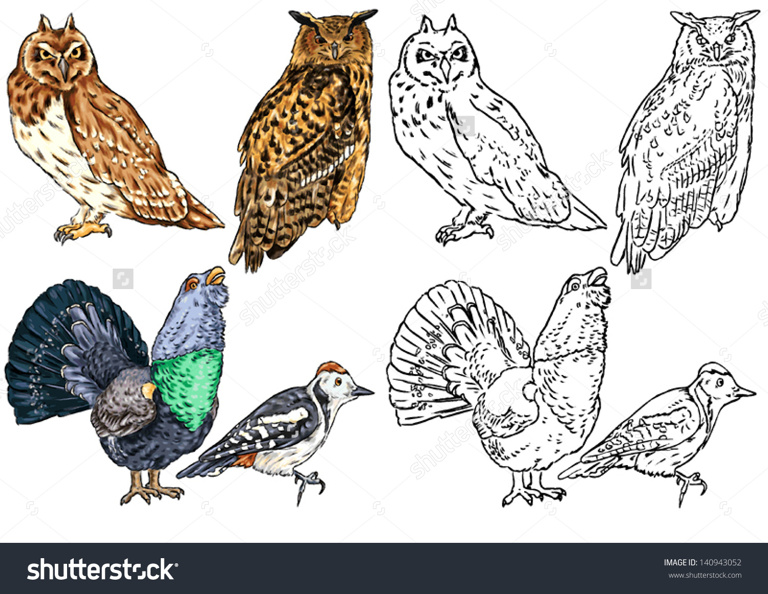 Color Drawing Contour Wild Birds Living Stock Vector 140943052.