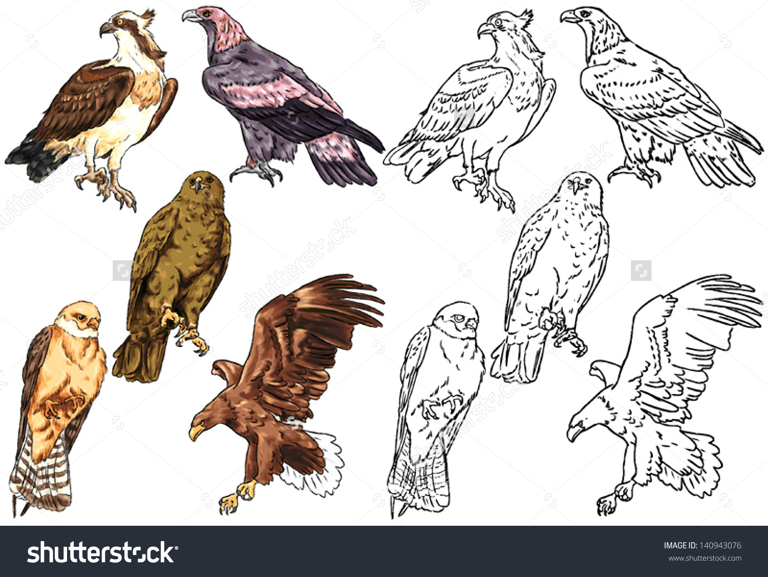 Color Drawing Contour Wild Birds Living Stock Vector 140943076.