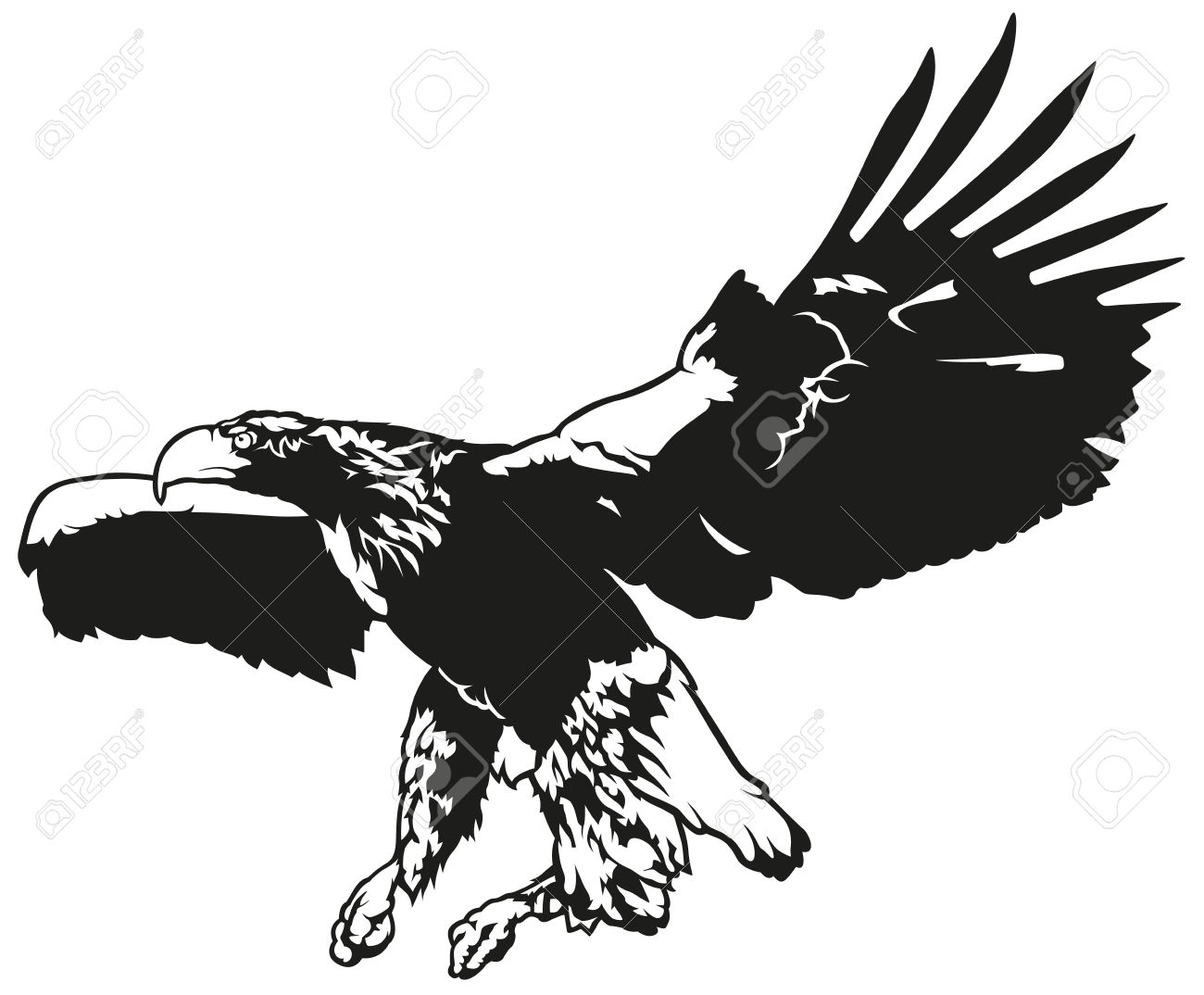 Black And White Flying Eagle.