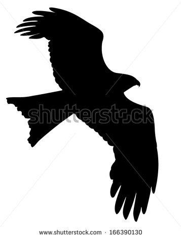 Hawk Flying Stock Photos, Royalty.