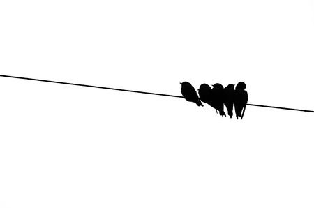 2,663 Birds On A Wire Stock Vector Illustration And Royalty Free.