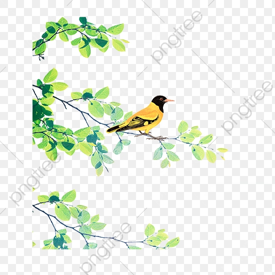 A Thrush Bird Standing On A Branch, Bird Clipart, Branch Clipart.