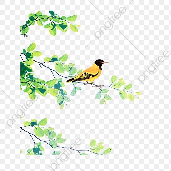 A Thrush Bird Standing On A Branch, Bird Clipart, Branch Clipart.