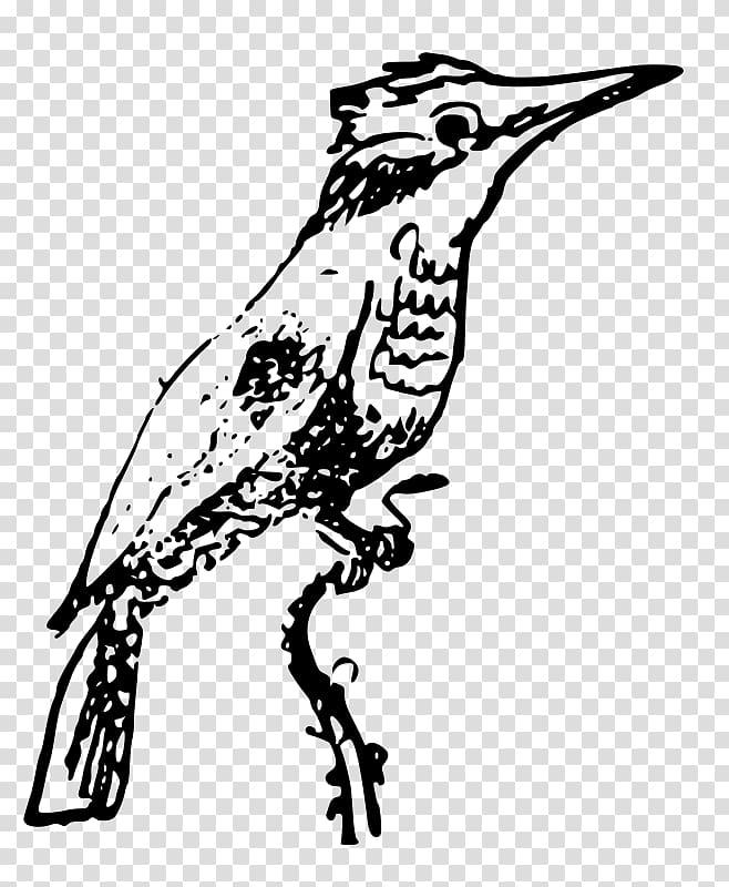 Beak Belted kingfisher Bird , Bird transparent background.