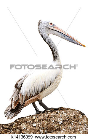Stock Illustration of Birds,. Beaked mouth,. Wings,. Wing.