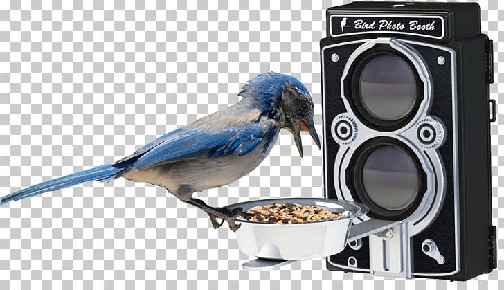 Bird Feeders Bird feeding Hummingbird Bird Food, PHOTO BOOTH.