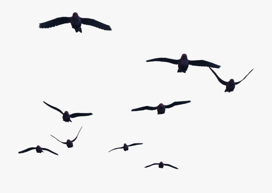 Vector Duck Flying Bird.