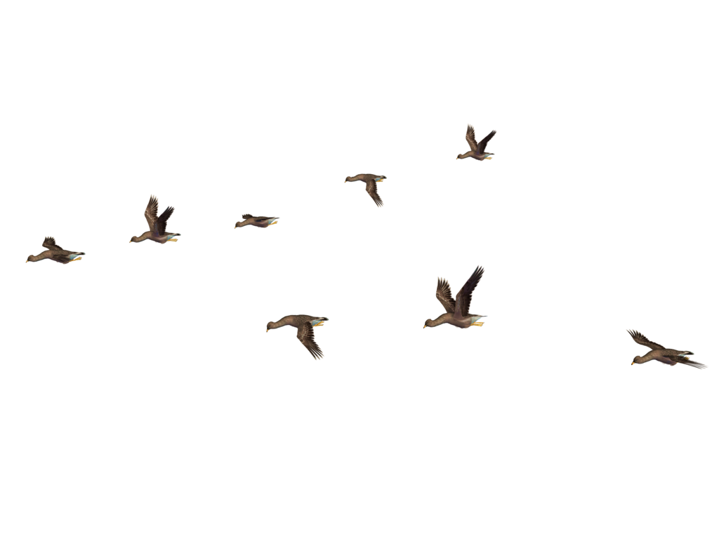 PNG Bird Images, Flying Birds Pictures Clipart.