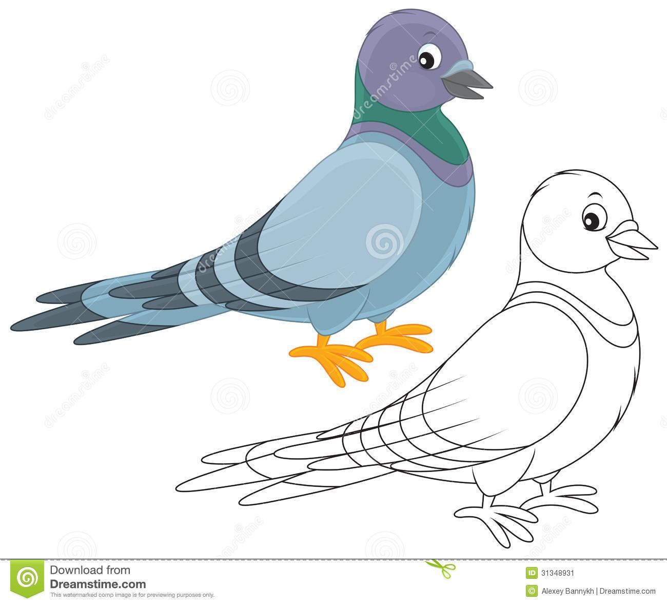Pigeon Stock Image.