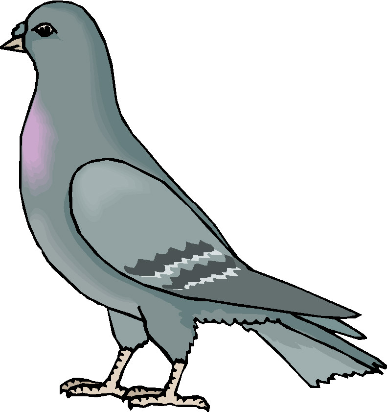 Pigeon head art